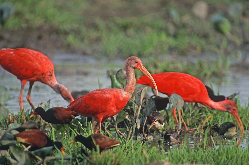 the scarlet ibis movie